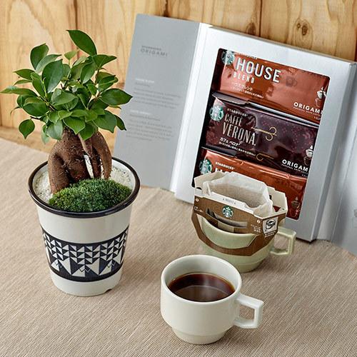 父の日 スターバックス「ドリップコーヒー」と観葉植物のセット